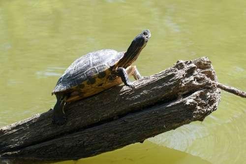 Frog Turtle Shell Summer Landscape Nature Animals