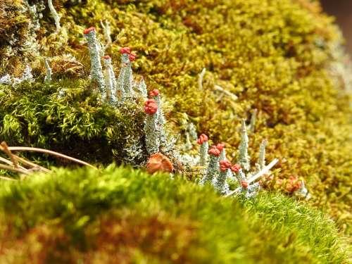 Fungi Stone Nature Landscape Lichen Moss Green