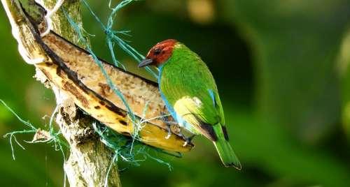 Garden Ave Bird Exotic Guatica