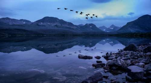 Glacier National Park Geese Over Lake Geese Migrate