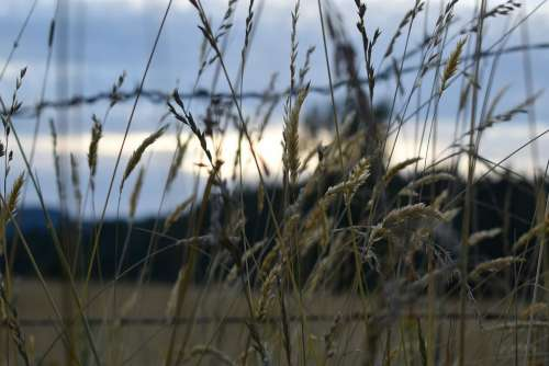 Grass Fence Wire Background Wallpaper Sunset Farm