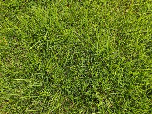 Grass Green Environment Lawn Nature