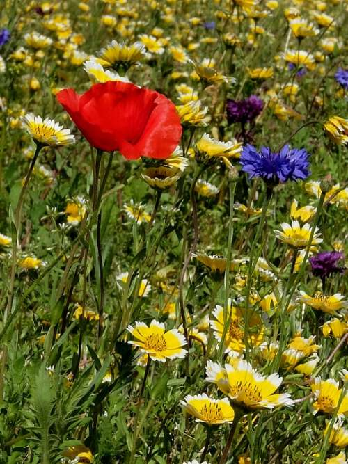 Group Of Flowers Garden Nature Prato