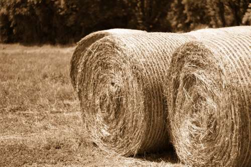 Hay Bales Landscape Agriculture Nature Field Air