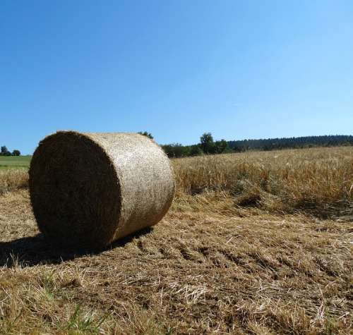 Hay Bales Bale Agriculture Straw Bales Round Bales