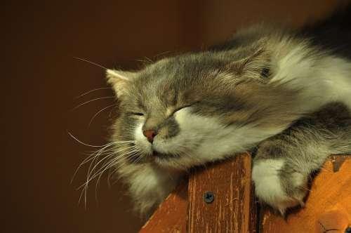 Head Cat Sleeps Squinting His Eyes Basking Furry