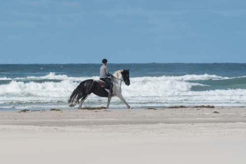 Horse Beach Sand Sea Water Coast Riding