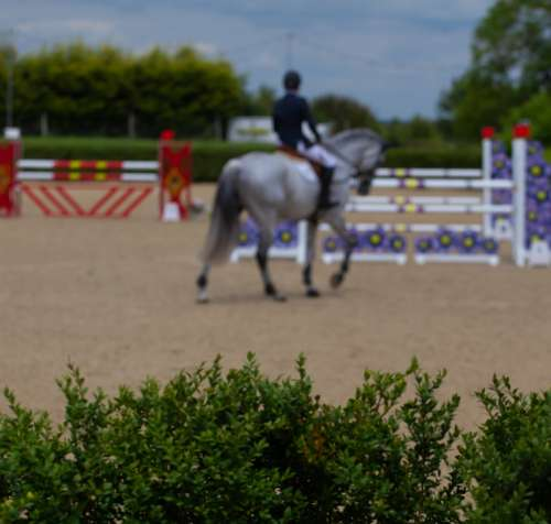 Horse Jumping Jumping Equestrian Horse Competition