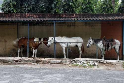 Horses Resting Eating Nature Mammal Equine