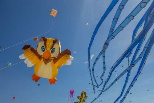 Kite Festival Beach Color Wind Sky Fly