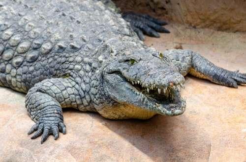 La Ferme Aux Crocodilles Crocodile Crocodile Farm