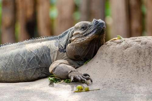 La Ferme Aux Crocodilles Crocodile Farm France