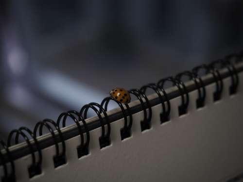 Ladybug Bug Insects
