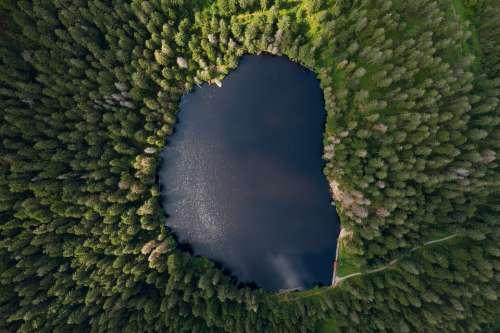 Lake Waldsee Forest Water Landscape Nature