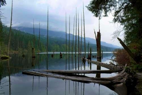 Lake Trees Nature Landscape River Forest