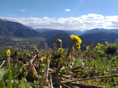 Landscape Mountains Flowers Wild Flowers Nature