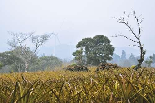 Landscape Guatemala Sky Clouds Nature Plantings