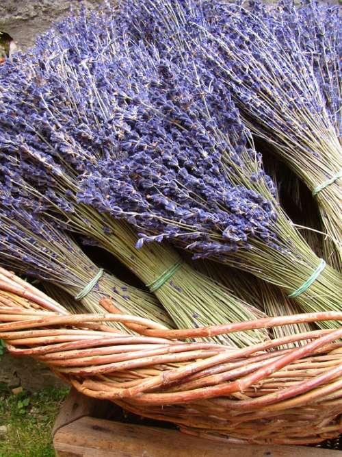 Lavender Dried Plant Fragrance Flowers Decoration