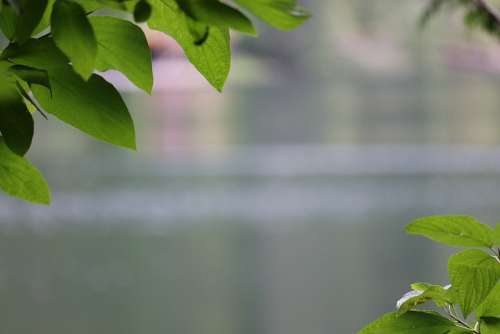 Leaves Leaf Nature Green Colorful Forest Water