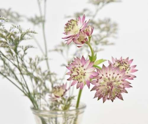 Light Purple Flowers Spring Plant Purple Floret