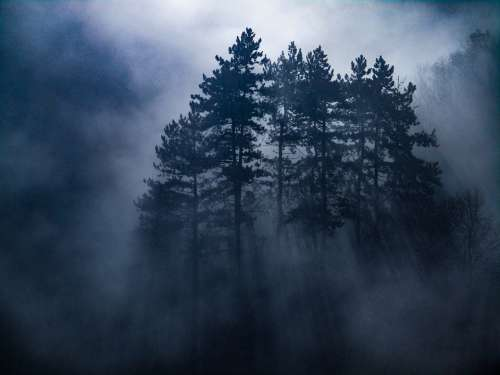 Mist Morning Forest Fog Landscape Nature Trees