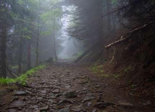 Mountains Forest Nature Landscape Tourism Mood