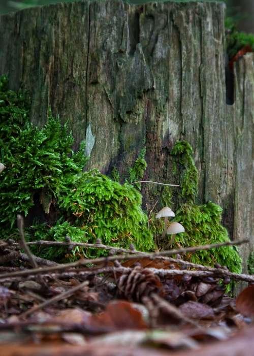 Mushrooms Moss Forest Moist Autumn Nature