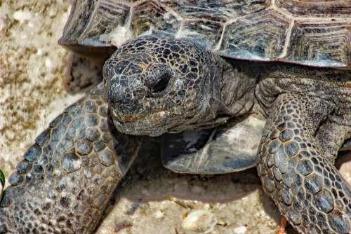 Nature Sand Exotic Animal Beach Wildlife Tortoise