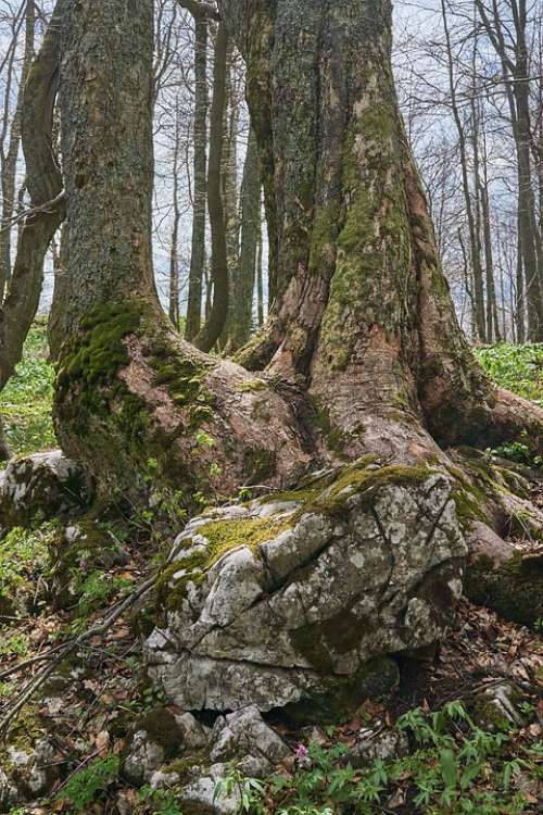 Nature Slovakia Tourism Trees Forest Scenic