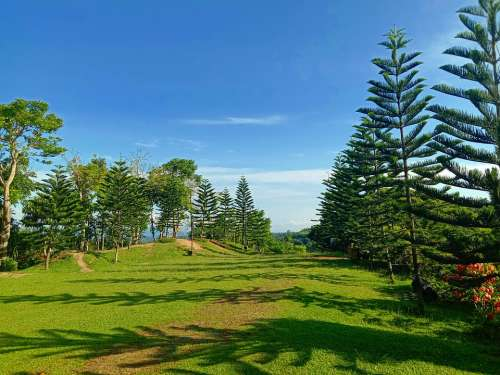 Nature Trees Sky Grass Landscape