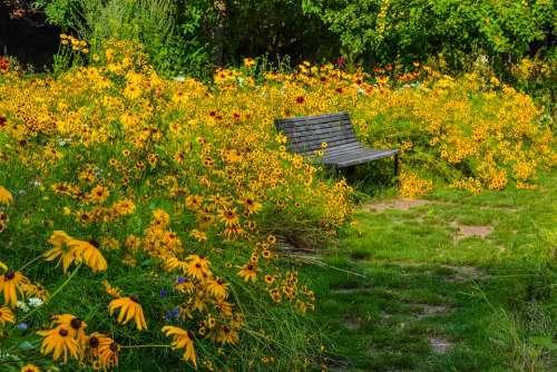 Nature Flowers Bank Summer
