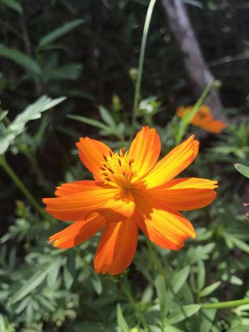 Orange Flowers Children The Sun Small Yellow Flowers