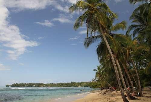 Palms Beach Island Sea Nature Sand Paradise Palm