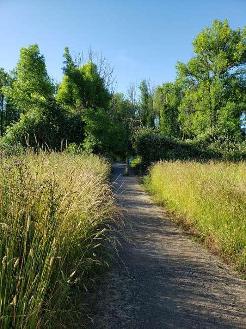 Path Trail Nature Peaceful