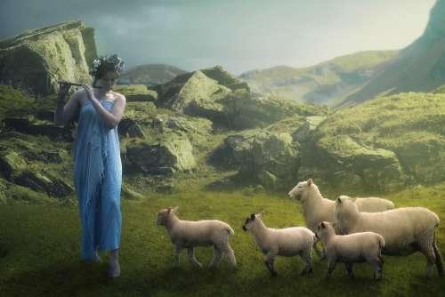 Photoshop Collage Design Postcard Sheep Cowgirl