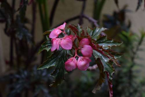 Pink Green Nature Food Rain