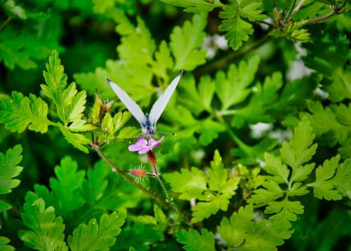 Plant Nature Butterfly