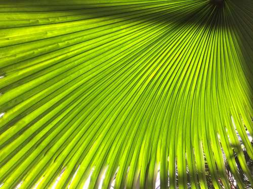 Plant Subjects Green Leaf
