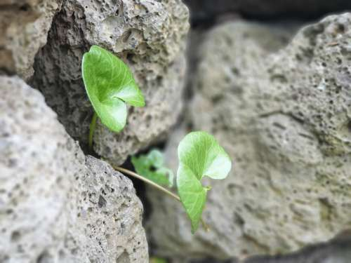 Plants Stone Nature Green Wall The Leaves