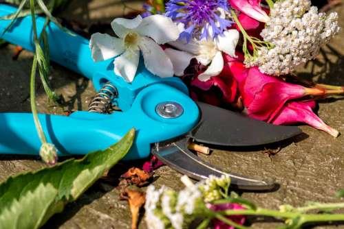 Pruning Shears Cut Sharp Gardening Flowers