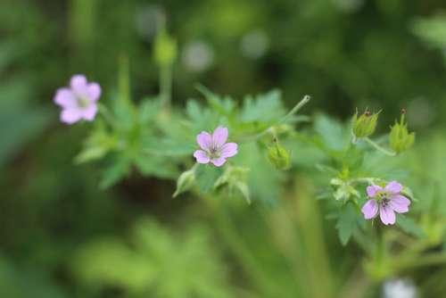 Purple Flower Macro Nature Garden Blooming Summer