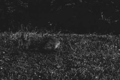 Rabbit Bunny Nature Cute Easter Wildlife Grass