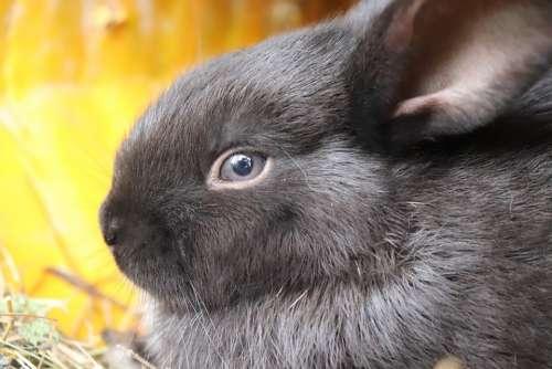 Rabbit Black Rabbit Nature Animal Black Cute