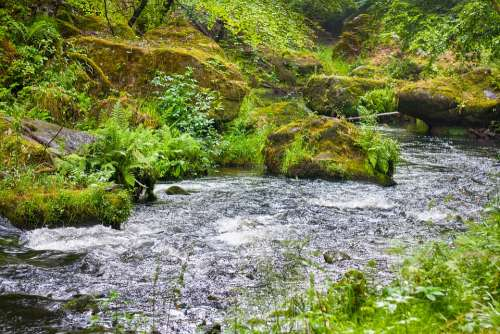 River Stream Water Landscape Nature Forest Scenic