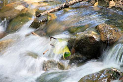 River Mountain Water Leaf
