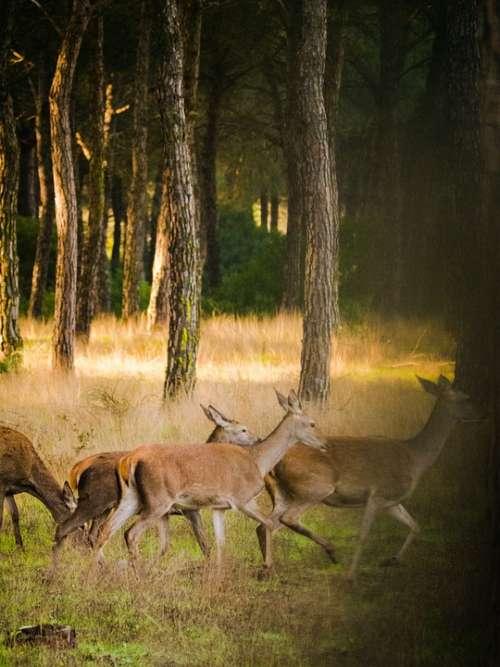 Roe Deer Flock Nature Landscape Wild Animal World