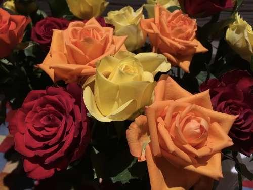 Rose Bunch Summer Roses Summer Bouquet Bloom