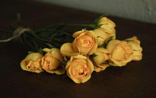 Roses Flowers Nature Bloom Blossom Romantic
