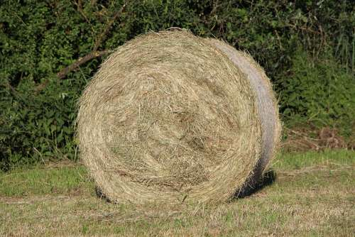 Round Bales Nature Hay Meadow