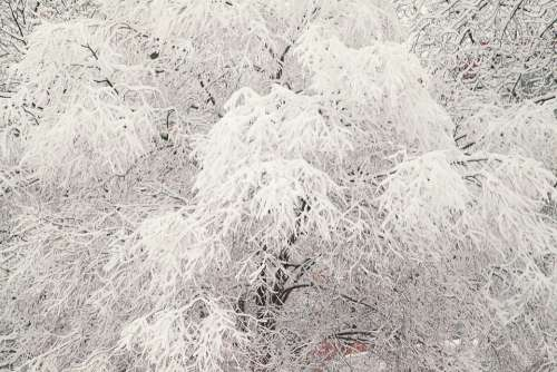 Russian Winter White Snow Snow Covered Trees Moscow